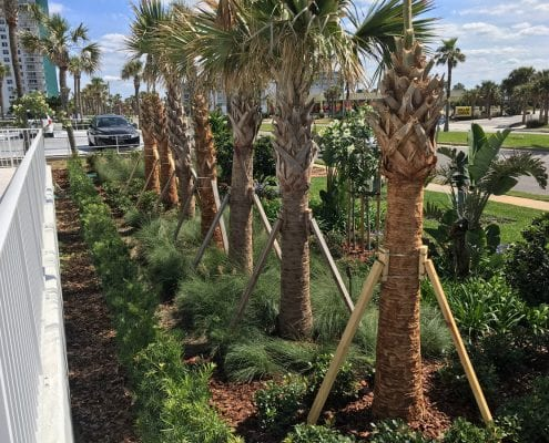 Commercial Landscaping for the Orlando, Florida Area by BLG Environmental Services
